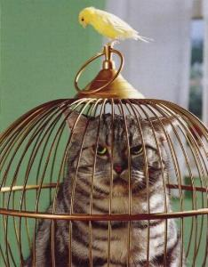 birdcagecat@It will get better.jpg
